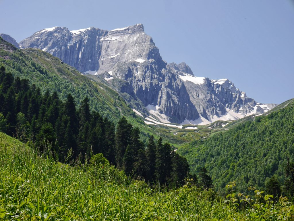 Mountain with Meadow Backdrop