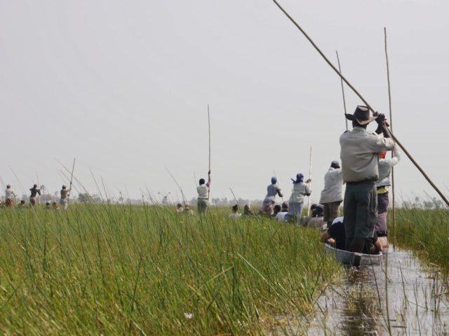 Mokoro canoes in the Okavango Delta