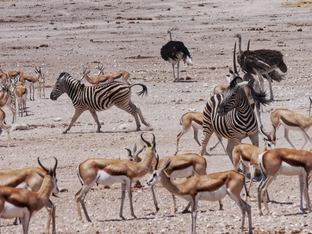 Watering Hole in Etosha National Park