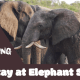 Stay at Elephant Sands