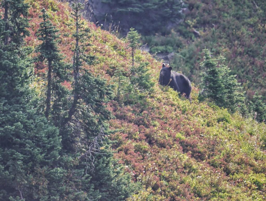 Bears on Sourdough
