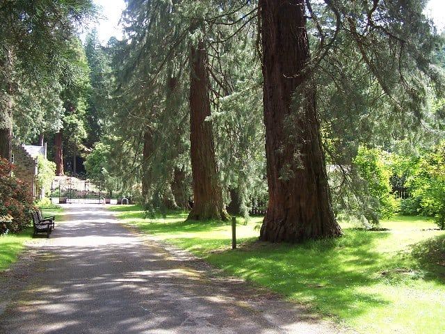 A walk starts from Benmore Gardens on the Cowal Peninsula. Pic credit: William Craig