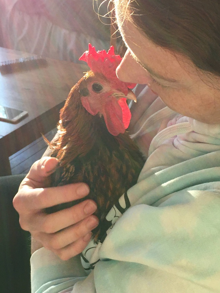 a human holds a small rooster