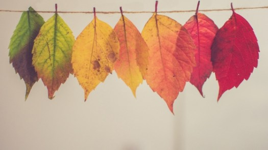 different coloured leaves lined up together