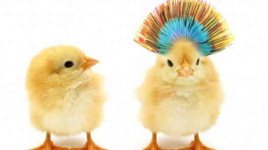 There are two chicks standing side by side.