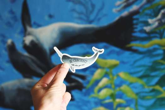 A hand holding a sticker resembling a fish with Be Content written on it and real fishes in the background