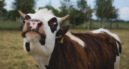 Red Hat reports 'Dirty Cow' Linux kernel bug