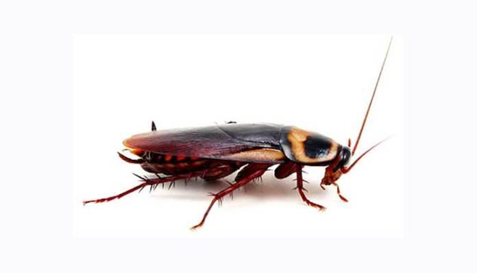 CockroachDB