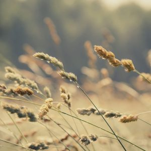 Softening Life's Edges