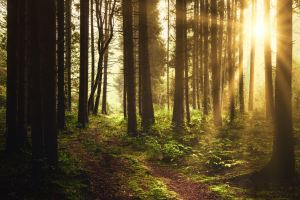 Mindfulness In Nature 3-Wk Course