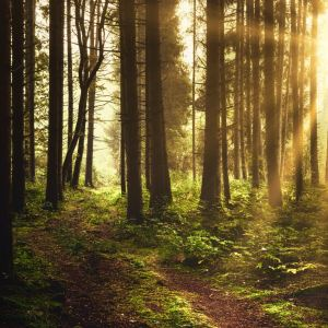 brown trees on forest during afternoon light Mindfulness in Nature