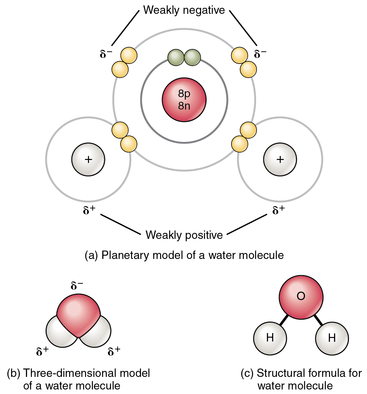 2 2 Chemical Bonds Anatomy And Physiology