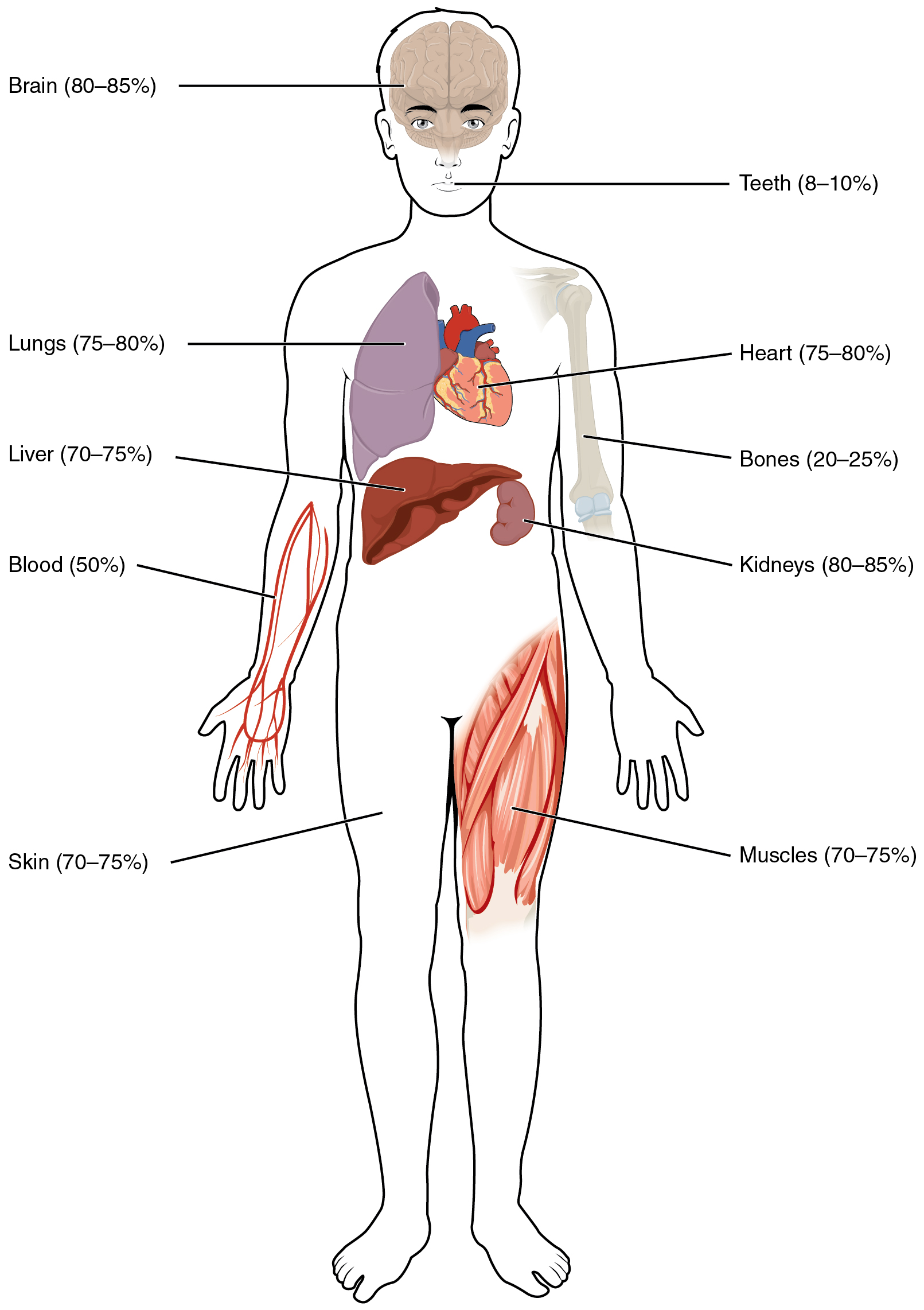 26 1 Body Fluids And Fluid Compartments Anatomy And