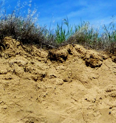 Photograph of Poorly developed soil on wind-blown silt (loess) in an arid part of northeastern Washington State.