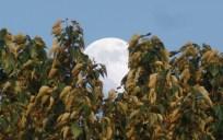 Moon in Branches (Karen Molenaar Terrell)