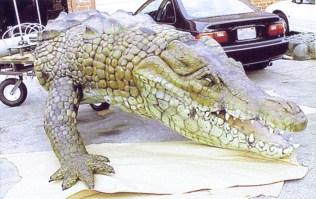 The crocodile finished, 1999.