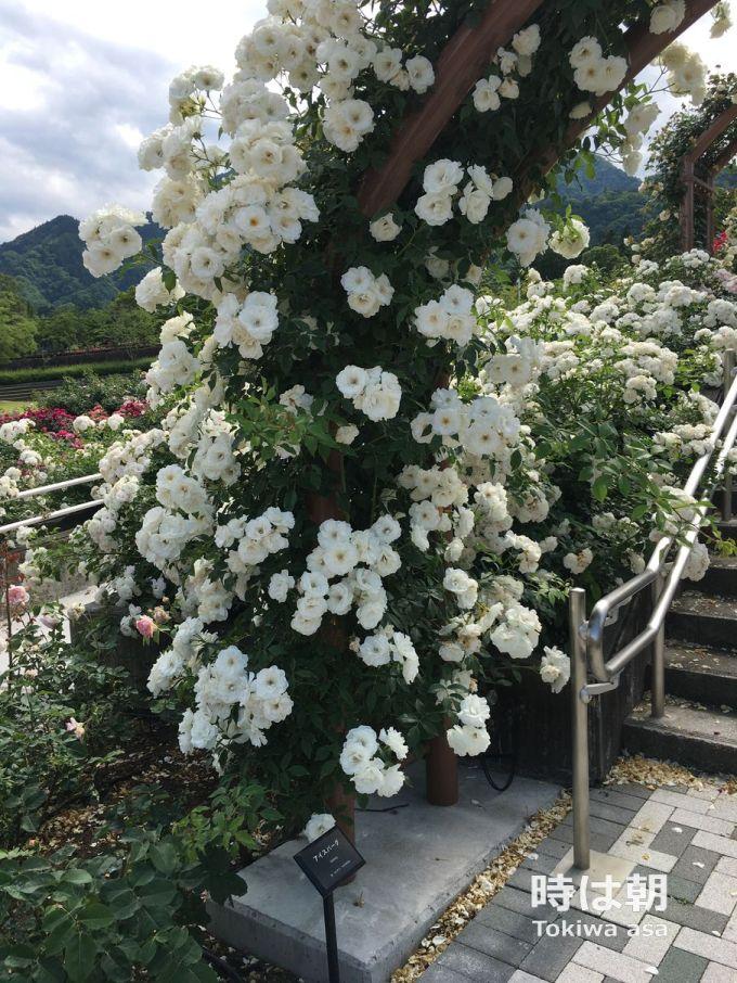 つるアイスバーグ 富士川クラフトパーク