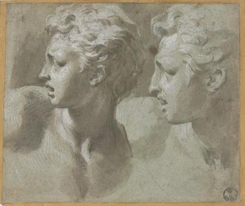 Francesco Mazzola detto il Parmigianino, Due studi della stessa testa di un giovane di profilo (dal Laocoonte) - Pennello e inchiostro diluito, biacca (carbonato basico di piombo), carboncino, parziale puntinatura (sulla figura a sinistra), carta cerulea - Firenze, Gabinetto Disegni e Stampe degli Uffizi