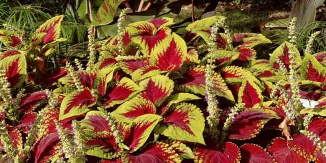 Botanical Conservatory of Fort Wayne