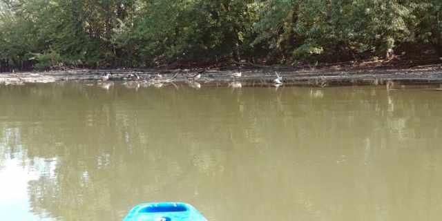 birds nesting on the river