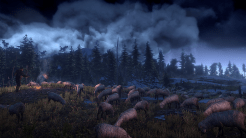 The Witcher 3: Wild Hunt | Sheep