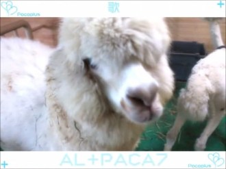 PacaPlus   Opening