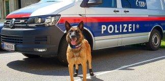 Полицейские собаки в Вене в жару носят кеды. Фото: LPD Wien/ТАСС