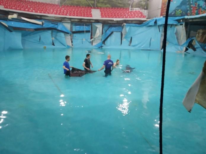 В Алуште развалился бассейн с дельфинами, вода хлынула на улицы, но животных спасли. Фото - Страна.ua 1