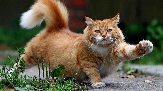 Kenali Suasana Hati Kucing dari Gerak Ekornya.