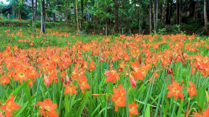Tempat Wisata Taman Bunga di Indonesia