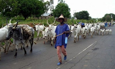 Fulani Herdsmen 620x400