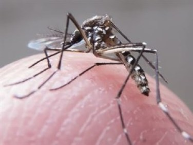 15847936280003622710000-300x225 PB tem 161 municípios com risco iminente ou alerta de epidemia de zika vírus e dengue