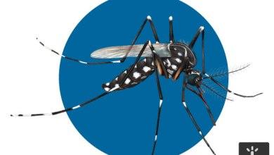 Corrida por vacina contra vírus da zika movimenta laboratórios pelo mundo 7