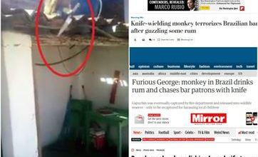 Macaco bêbado e armado em bar na PB vira destaque em jornais internacionais 6