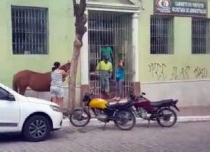 timthumb-10-300x218 Revoltada, mulher amarra cavalo em frente a Prefeitura de Pocinhos