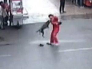 cao-ataque-300x225 Cão enfurecido ataca 23 pessoas e causa pânico na China