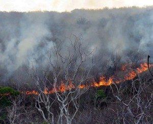fogo-300x244-300x244 Fogo continua devastando caatinga entre Junco do Seridó e Assunção