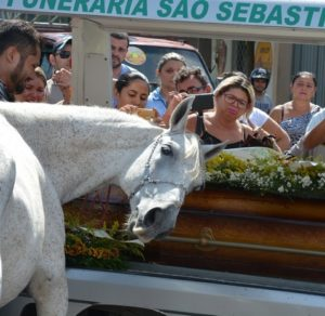 cavalo1-1-300x292 Cavalo se despede do dono morto em acidente e comove velório