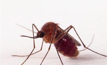 Transmissão de zika por pernilongo pode explicar incidência em algumas regiões 6