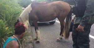 cavalo-2-300x156-300x156 Homem que usava cavalo e chave de fenda para assaltar é preso em João Pessoa