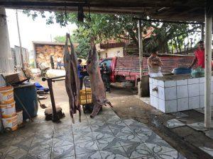 matadouro-joao-pessoa-300x225 Matadouro é fechado e 136 animais são apreendidos em João Pessoa