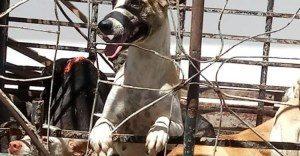 CAES-300x156 Secretário de Saúde de Igaracy é afastado por mandar matar cães