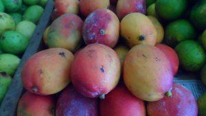 SAM_7040-300x169 Verdurão JK em Monteiro:  Frutas e verduras selecionadas diretamente da CEASA