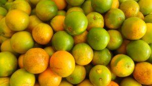 SAM_7043-300x169 Verdurão JK em Monteiro:  Frutas e verduras selecionadas diretamente da CEASA