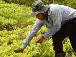Cooperado-da-agricultura-familiar-Foto-Ana-Teixeira-300x225 Lideranças do cooperativismo agropecuário se reúnem em JP