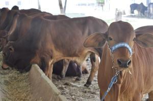 dsc0102-300x199 Expofeira PB Agronegócios tem início neste domingo