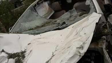EXCLUSIVO: Animais soltos na pista provocam acidente e deixa vítima fatal 3