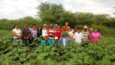 Plantações de algodão do Cariri são experiências em sistemas agroalimentares 1