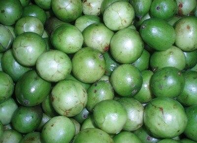 umbu Festival do Umbu em Sumé promove a valorização da fruta e seus derivados