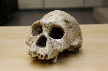 cranio-585x390 Descoberta de brasileiros pode mudar história da humanidade